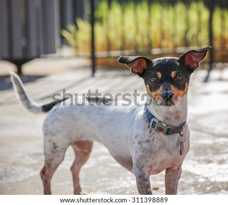 a dog swimming at a local public pool - stock photo