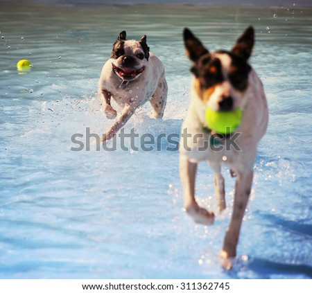 a dog swimming at a local public pool at sunset (focus on the dog in back 0 - stock photo