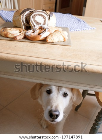 A dog under a table with various baked goods on top. - stock photo