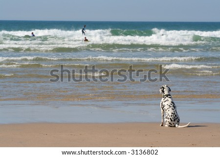A dog waiting for his master by the ocean's edge