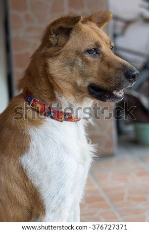 A dog waiting for its owner, selective focus
