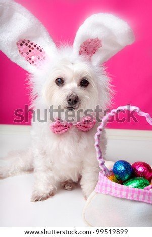 A dog wearing bunny ears sits beside a bag ful of delicious easter eggs. Pink background. Closeup - stock photo