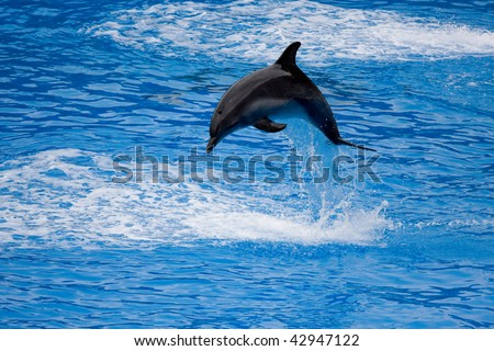 A dolphin jumps out from the water, snapped in Hong Kong Ocean Park