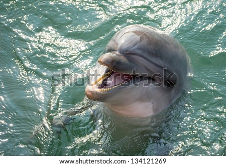 A dolphin laughing