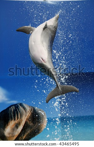 A dolphin on a waterpark makes a jump out of the pool. - stock photo
