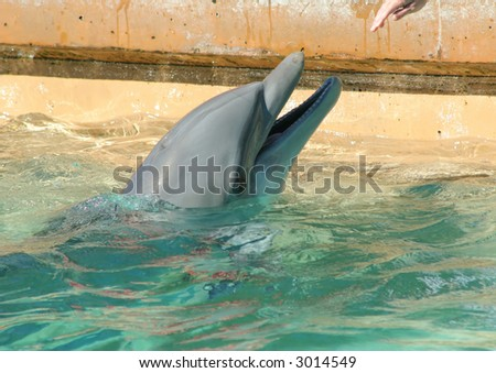 A Dolphin playing - stock photo
