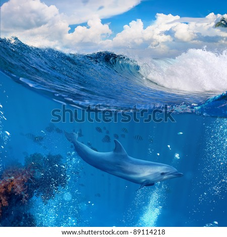 A dolphin swimming underwater and above him there is a tropical cloudscape - stock photo