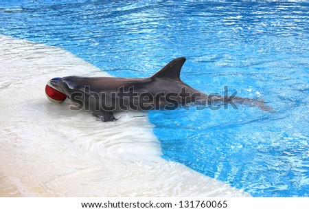 A Dolphin with a Ball in its Mouth on the Side of a Pool - stock photo