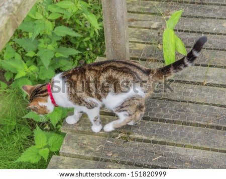 a domestic cat in a garden - stock photo