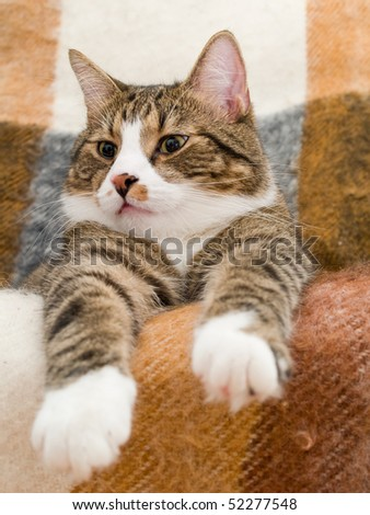 A domestic cat lying in a chair - stock photo