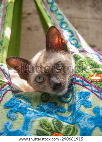 A domestic cat peeps out from a colorful embroidered bag for sale in the tourist markets near Khao San Road, Bangkok, Thailand - stock photo
