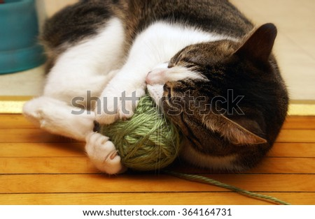 A domestic housecat plays with its ball of yarn.