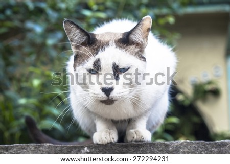 A domesticated ginger cat sits on a wall outdoors - stock photo