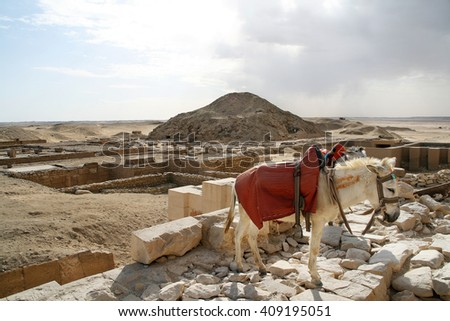 A donkey at the archeological site, Giza, Egypt  - stock photo