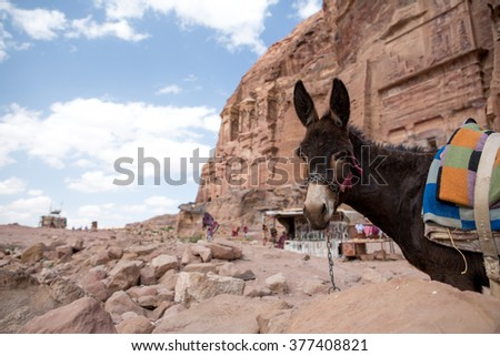 A donkey in the old Nabatean city Petra, Jordan - stock photo