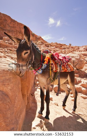 A donkey looking down. - stock photo