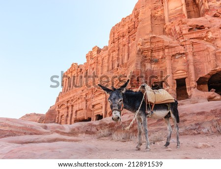 A Donkey stands in front of the ancient ruins of Petra, Jordan at dawn - stock photo