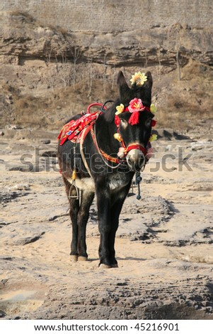 A donkey wearing flowers is waiting to serve tourists, earning money for its master. This photo was taken near the Yellow River in northwest China. tourism is the main income of local people. - stock photo