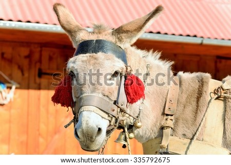 A donkey with red tassels waiting to be loaded with wood - stock photo