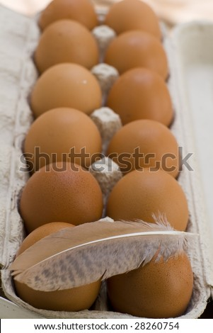A dozen of new-laid eggs of the day - stock photo