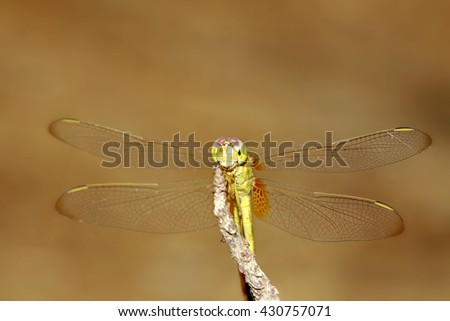 A dragonfly on branch