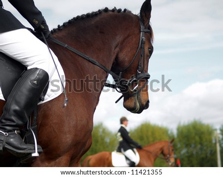 A dressage horse waiting his turn - stock photo