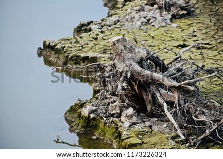 A dried dead tree parts around a lake unique natural photo