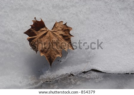 A dried heart-shaped leaf on snow and ice.  The snow and ice has been converted to black and white to further make the leaf stand out from the background.