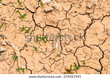 A dry and arid background image of a cracked earth texture with shoots of grass coming through the cracks to signify hope. - stock photo
