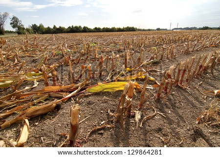 A dry field after the harvest. - stock photo