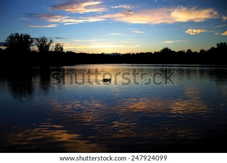 A duck swimming on the lake during one beautiful sunset on lake  - stock photo