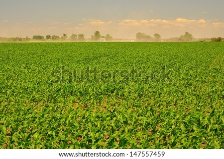 A dust storm behind a corn field in rural Iowa - stock photo