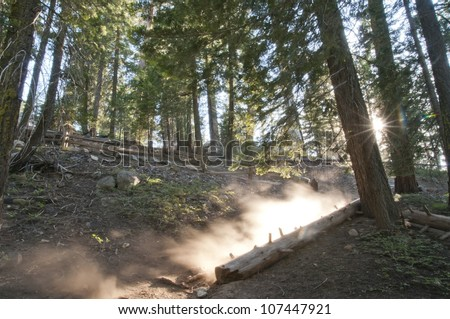 A dusty trail that lead to the General Grant Tree in Sequoia National Forest. - stock photo