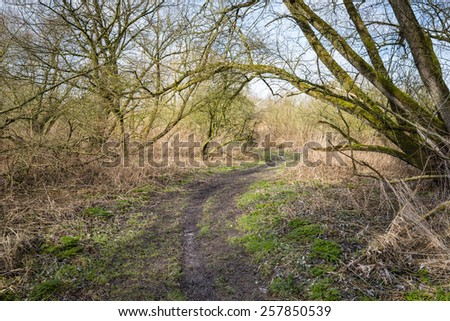 A Dutch nature reserve with a curved walkway. It's the end of the winter and the trees are still bare. - stock photo