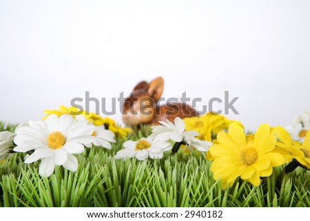 a easter bunny on a meadow with white and yellow flowers