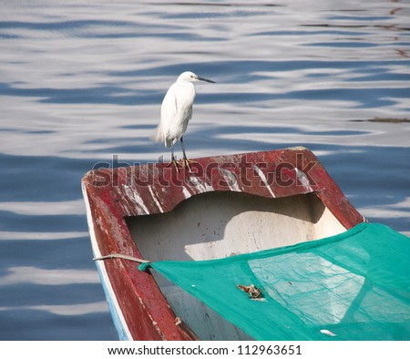 A  Egret, standing on a boat railing. - stock photo