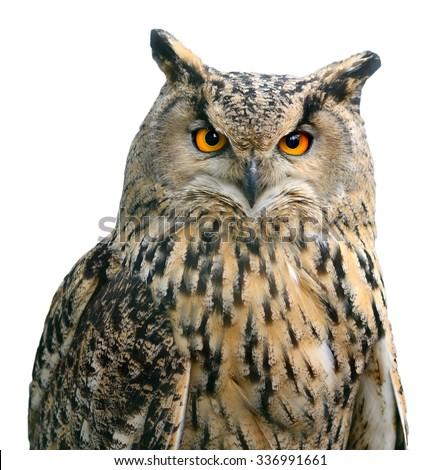 A Eurasian Eagle Owl. Portrait. Bird isolated on white  - stock photo