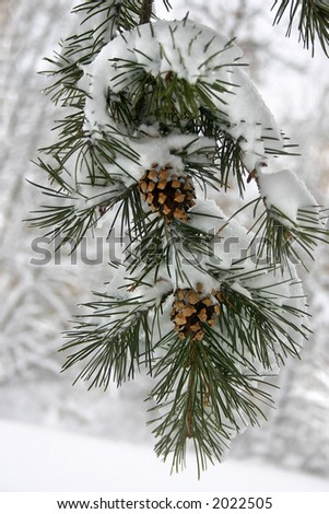 a evergreen branch with a heavy snow on it - stock photo