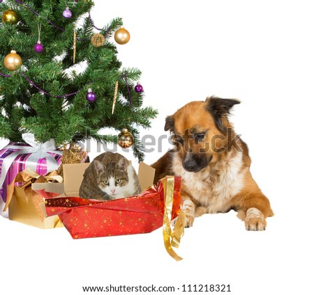 A faithful dog looks quizzically at its cat companion sitting comfortably in the remnants of an open red Christmas gift under a decorated tree, isolated on white for your Xmas wishes - stock photo