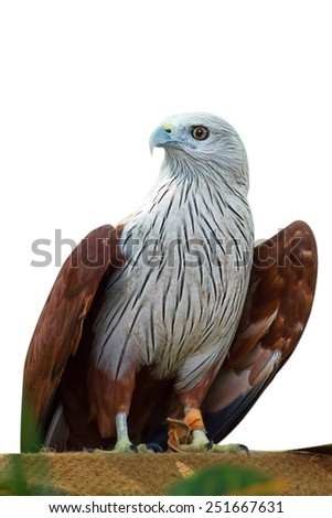 A falcon perched on a tree - stock photo