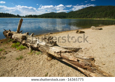 A fallen log sits along the bank of a lake in the middle of a pine forest