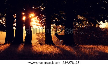 A fallow deer behind some trees early morning, silhouette - stock photo