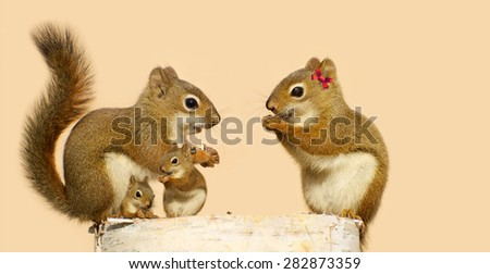 A family of cute squirrels perched on a birch log, enjoying seeds in the Spring.  The two babies sitting near their father. - stock photo