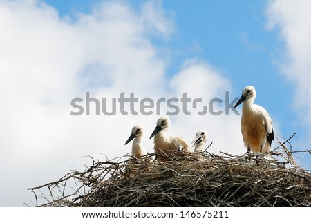 A family of storks sitting in the nest. - stock photo