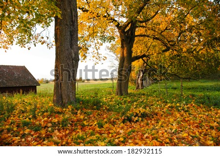 A farm dirt road in Fall season with trees in autumn colors. - stock photo