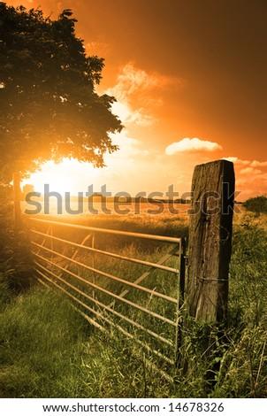 A farm fence leading into a corn field. - stock photo