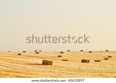 A farm field in the countryside filled with straw bales - stock photo