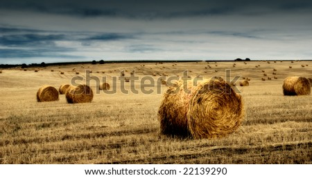 A farm field with a crop of grain / straw gathered into hay bale with a cloud full sky. - stock photo