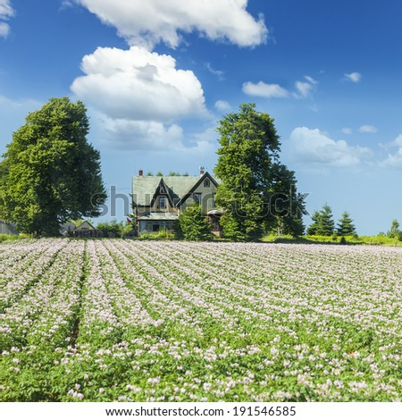 A farm field with rows of flowering potatoes in rural Prince Edward Island, Canada. - stock photo