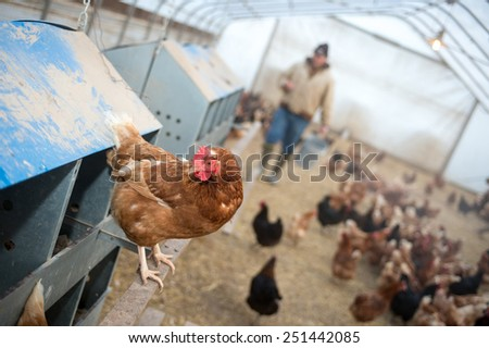A farmer brings feed into a chicken house on a farm in midwest United States. - stock photo